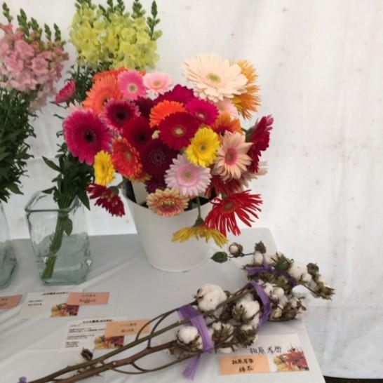 でてこい祭り 花の展示