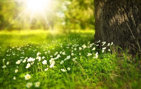 春が芽生え始めた