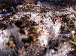 地面の霜柱
